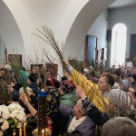 Palm Sunday - 8
